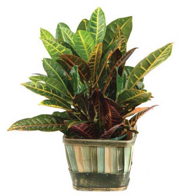 Plante - FPL-404
