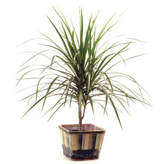 Plante - FPL-405