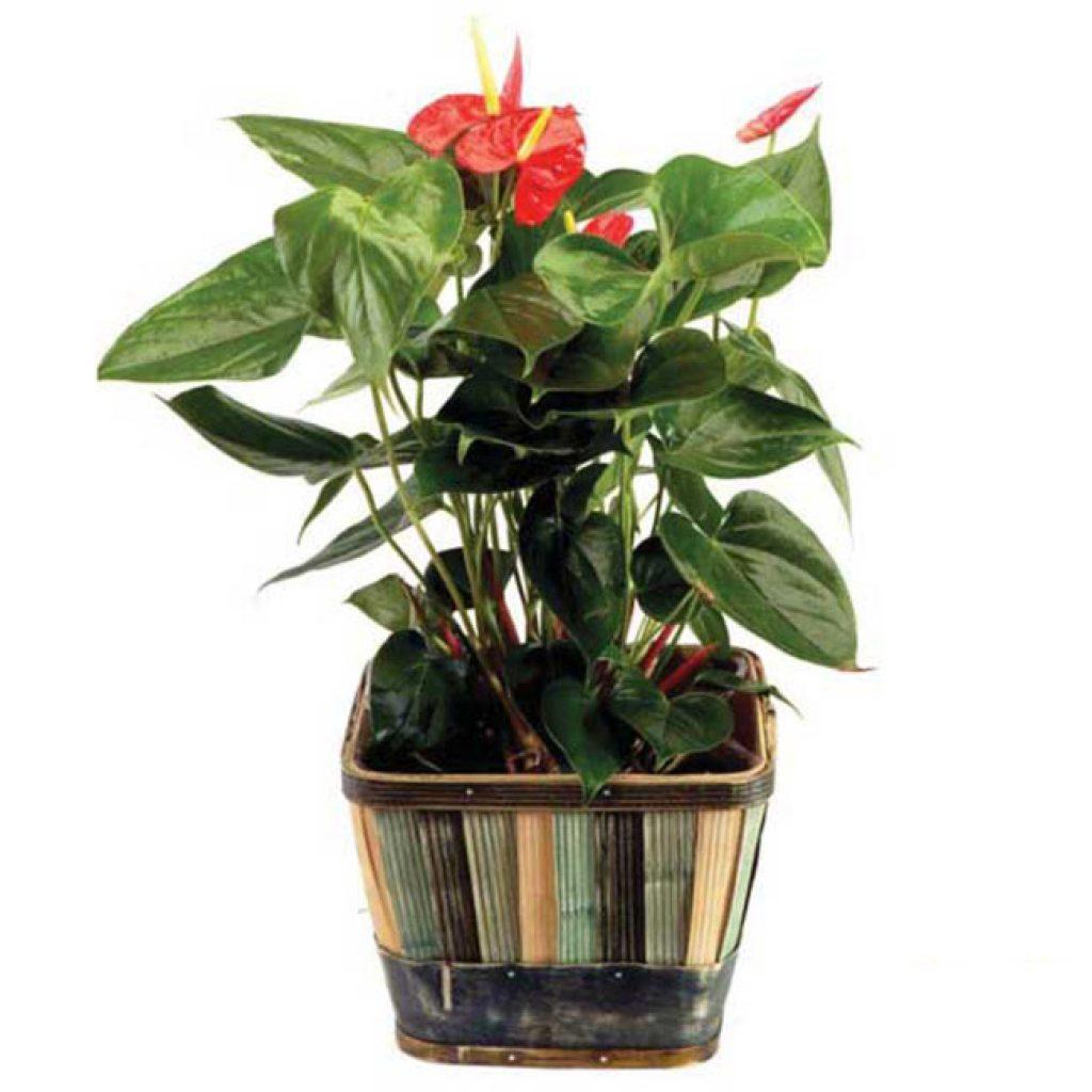 Plante - FPL-406