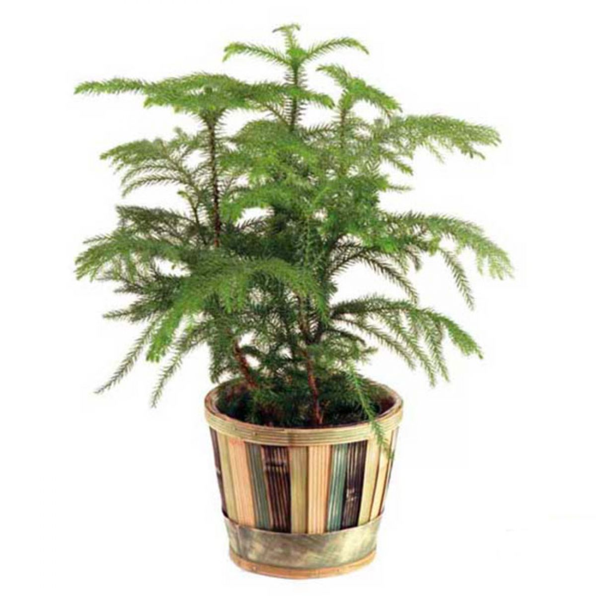 plante - FPL-407