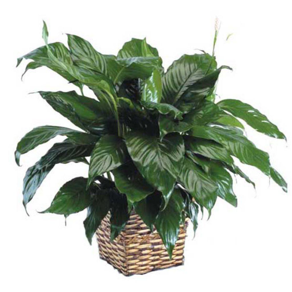 Plante - FPL-410