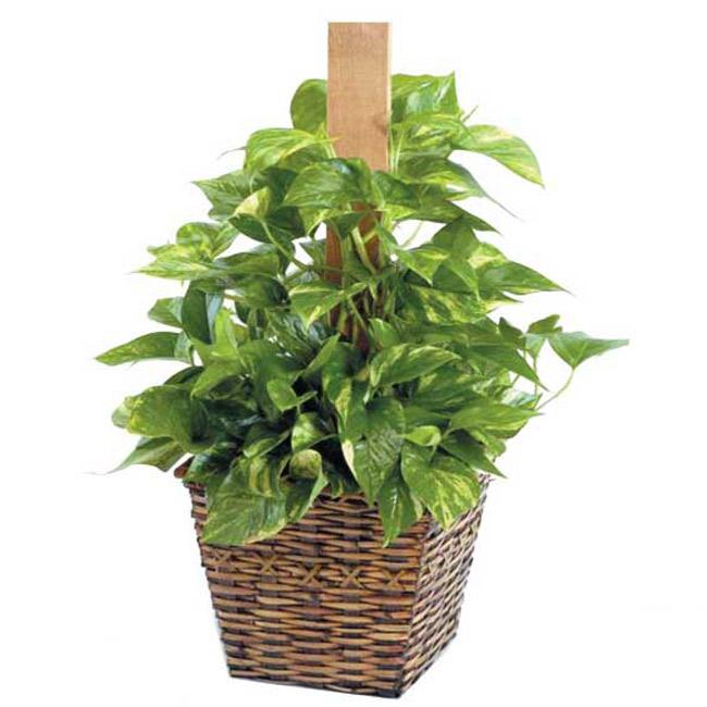 Plante - FPL-411